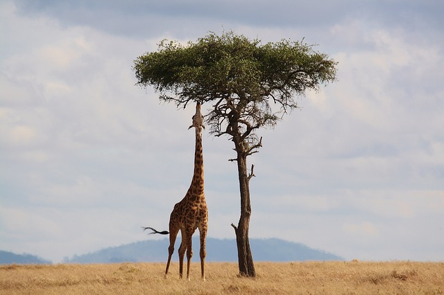 Things you should never leave behind on your trip to Africa
